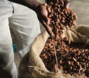Verzenden cacaobonen